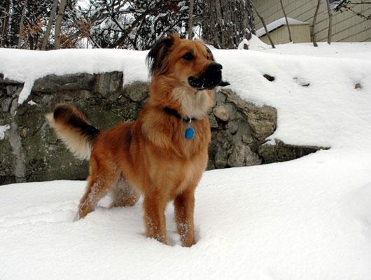 alfie-in-snow.jpg